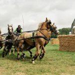Tip: De Dag van het Aangespannen Paard