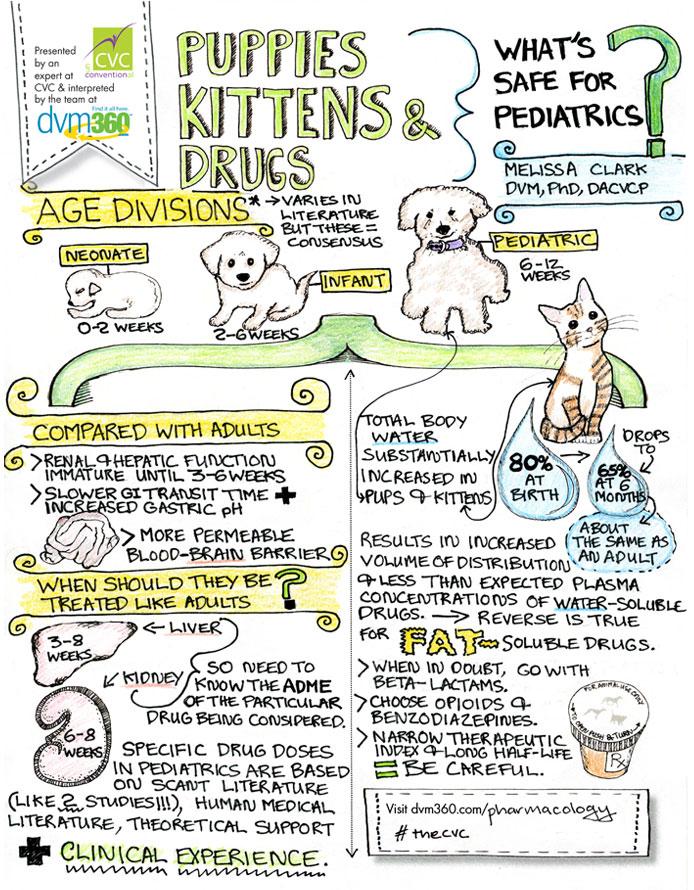 medicatie jonge dieren infographic